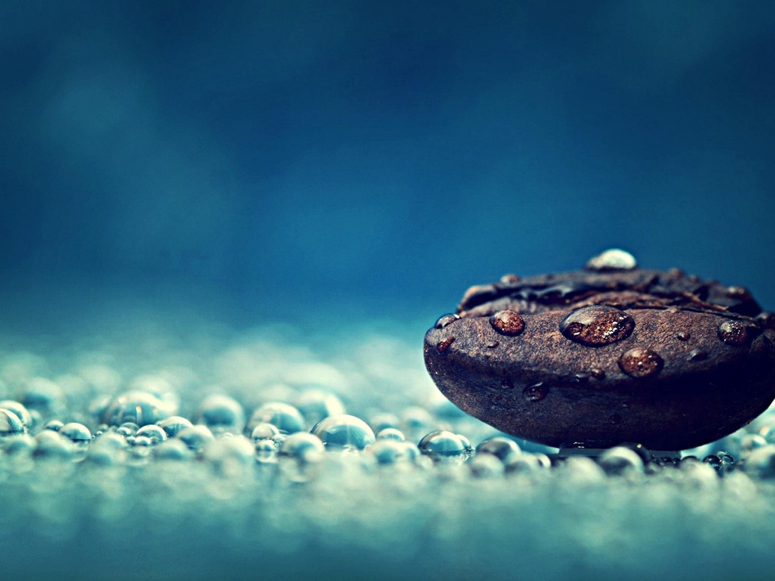 Nature Photography Water Drops Macro Photography Wallpaper