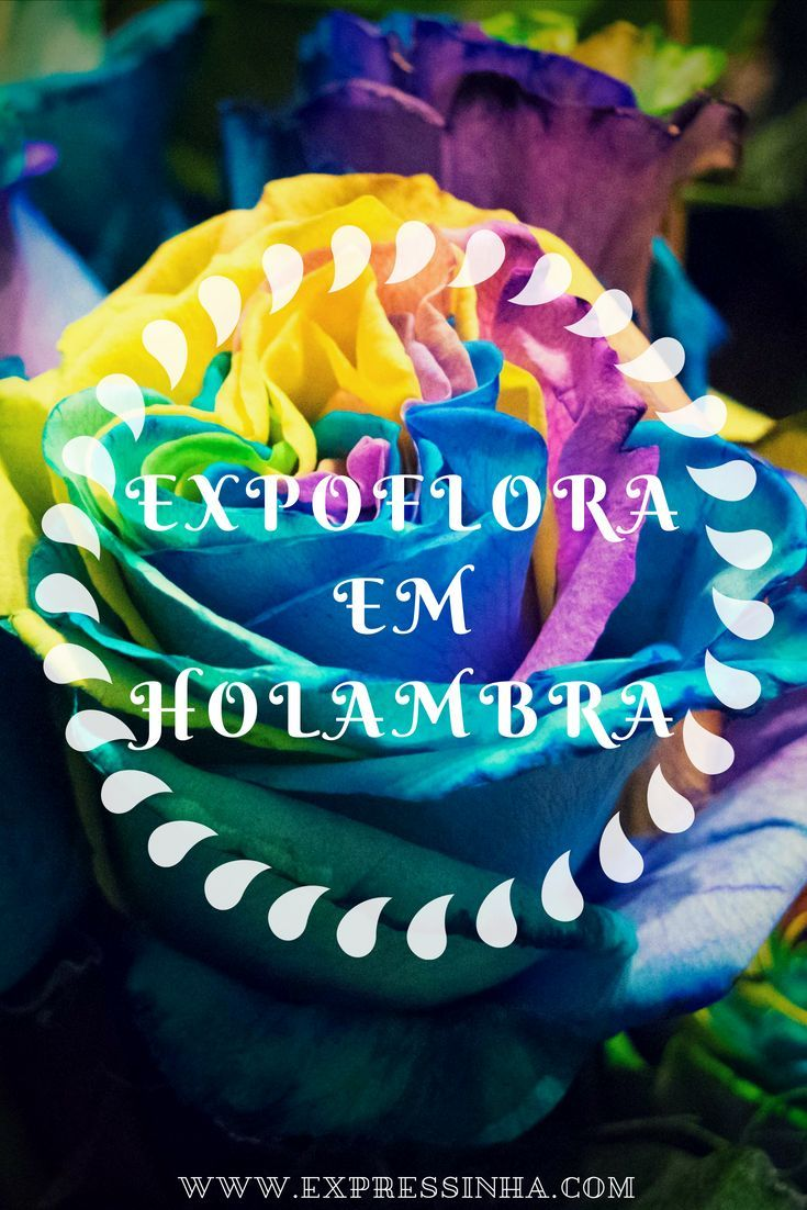 Visite A Expoflora Em Holambra Cidade Das Flores Eventos