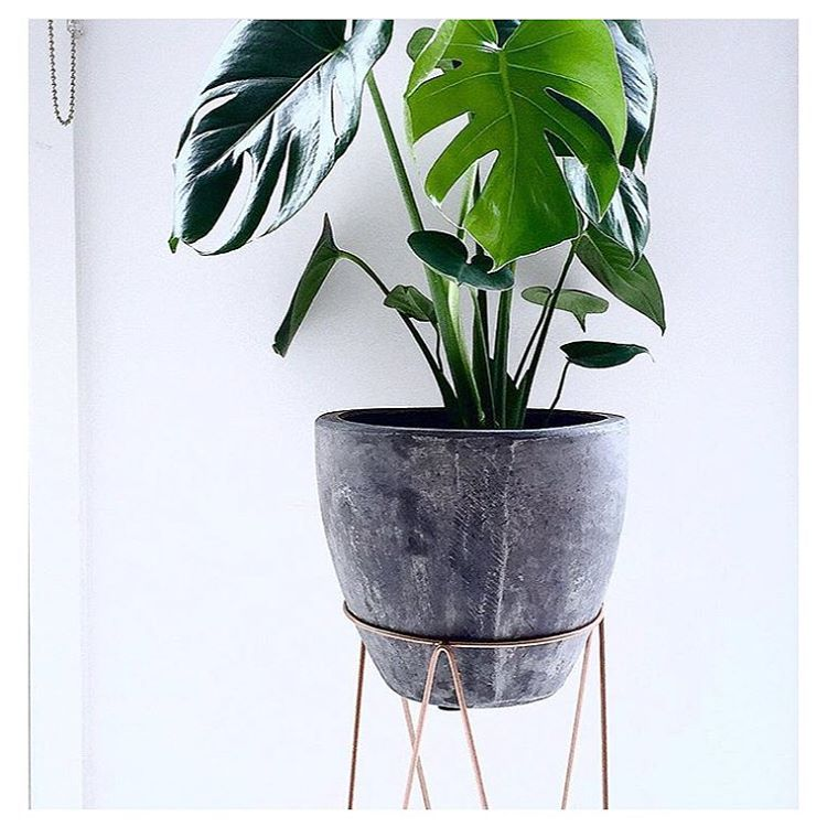 #regram from @avale featuring the Kmart copper plant stand and pot! #kmartaddictsunite #kmartstyling #kmartaus #interiorstyling #interiordesign #interiordecorating #interior #decor #design #style #styling #copper #copperlove #coppertrend