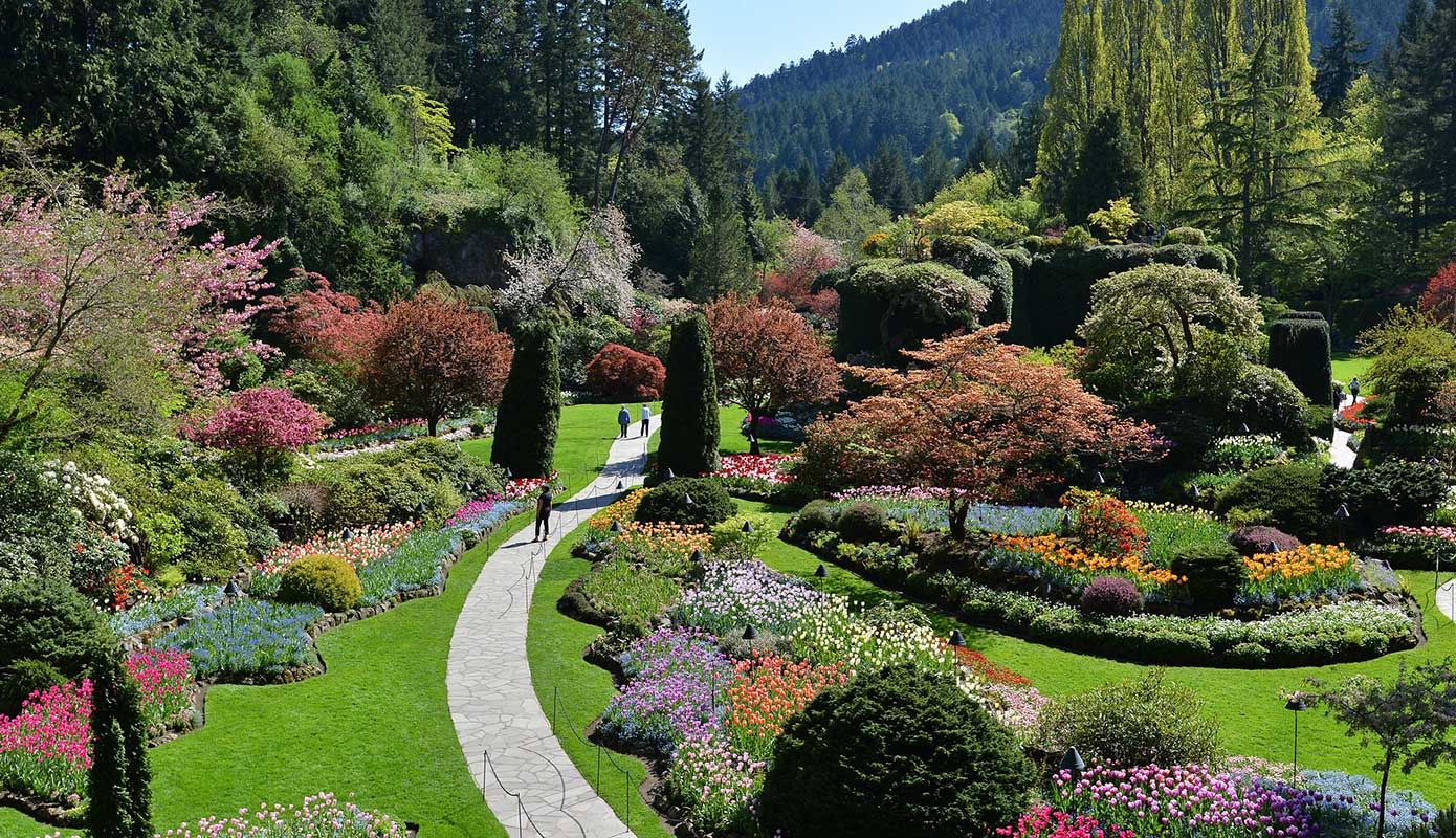 1710c29c819ef25121f9534dbee86944 - How Much Is Admission To Butchart Gardens