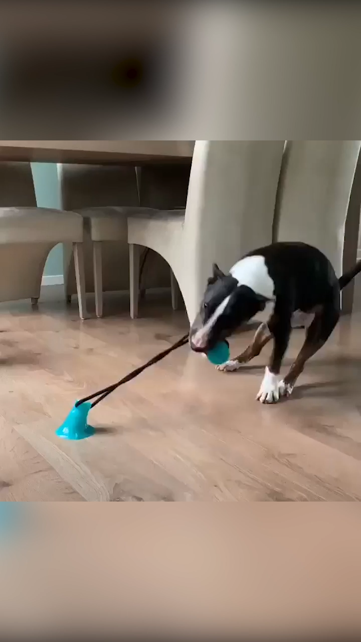 This Dog Toy Works Hilariously Well 😂