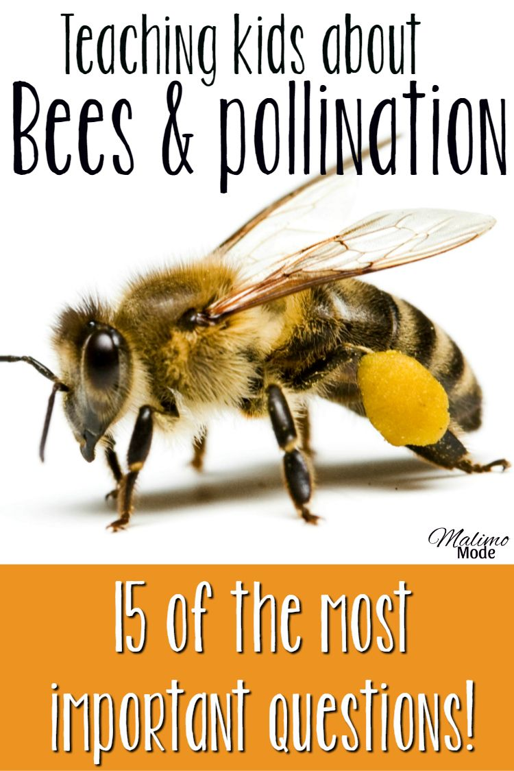 Worksheet Questions About Bees bees and pollination the 15 most important questions to ask importan especially tips on how teach children about topic help save