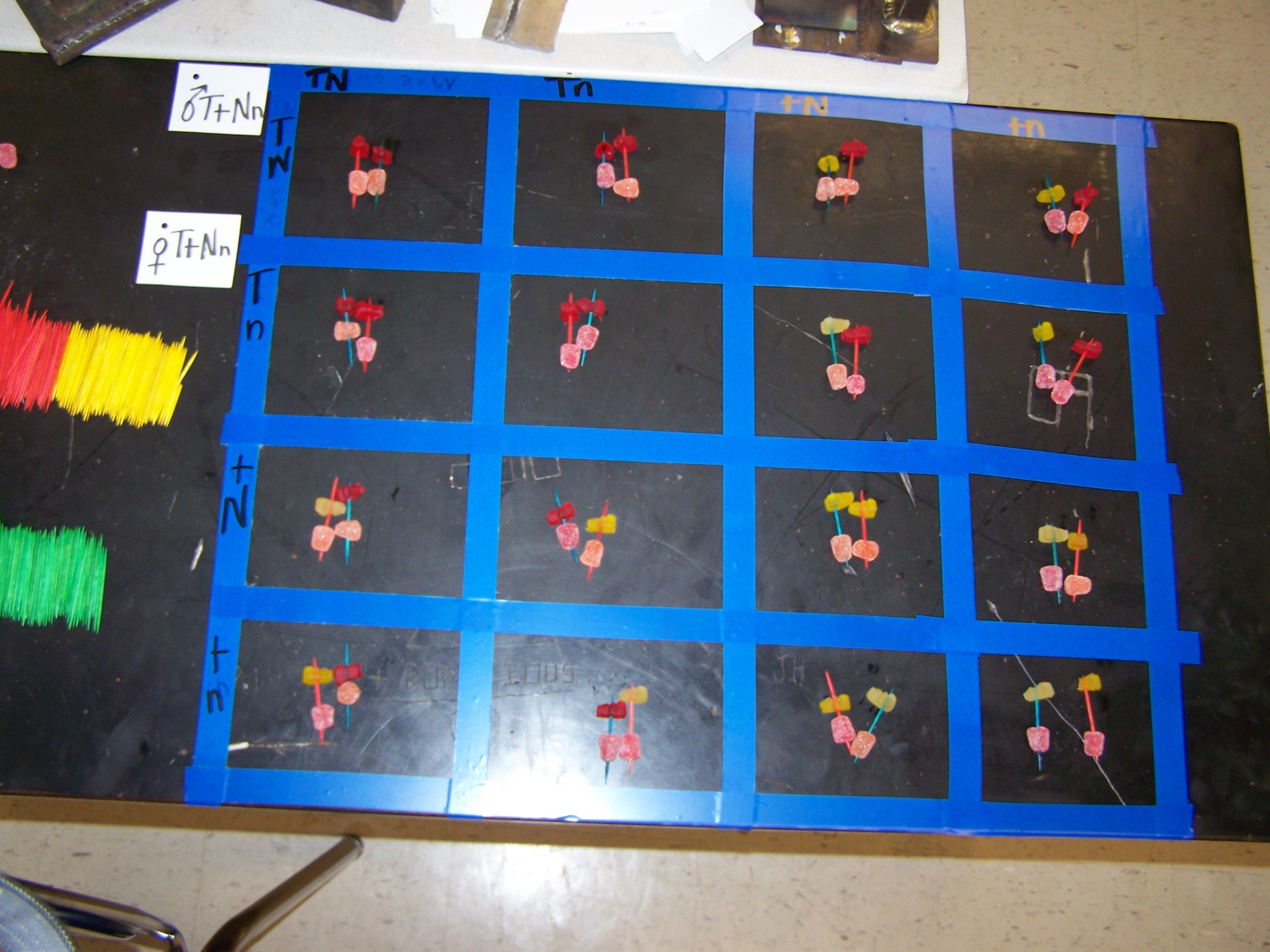 Lifesize Punnet Square For Kinesthetic Learners