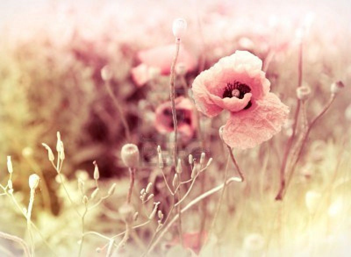 Girly Vintage Tumblr Backgrounds | www.pixshark.com ...