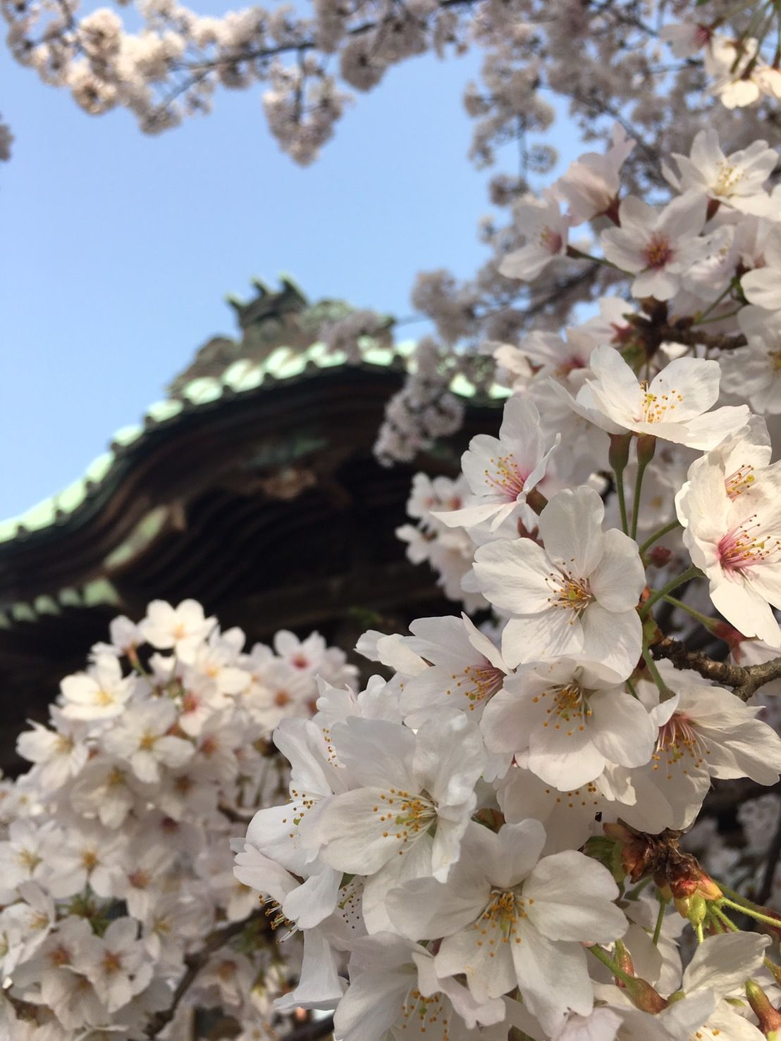 Pin Oleh Ni Putu Hany Yulia Di Cherry Blossoms Di 2020