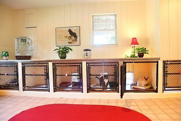 Cat Kennels For Boarding Cat Boarding Dog Boarding Kennels Cat Kennel Dog Hotel