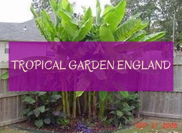 tropical garden england