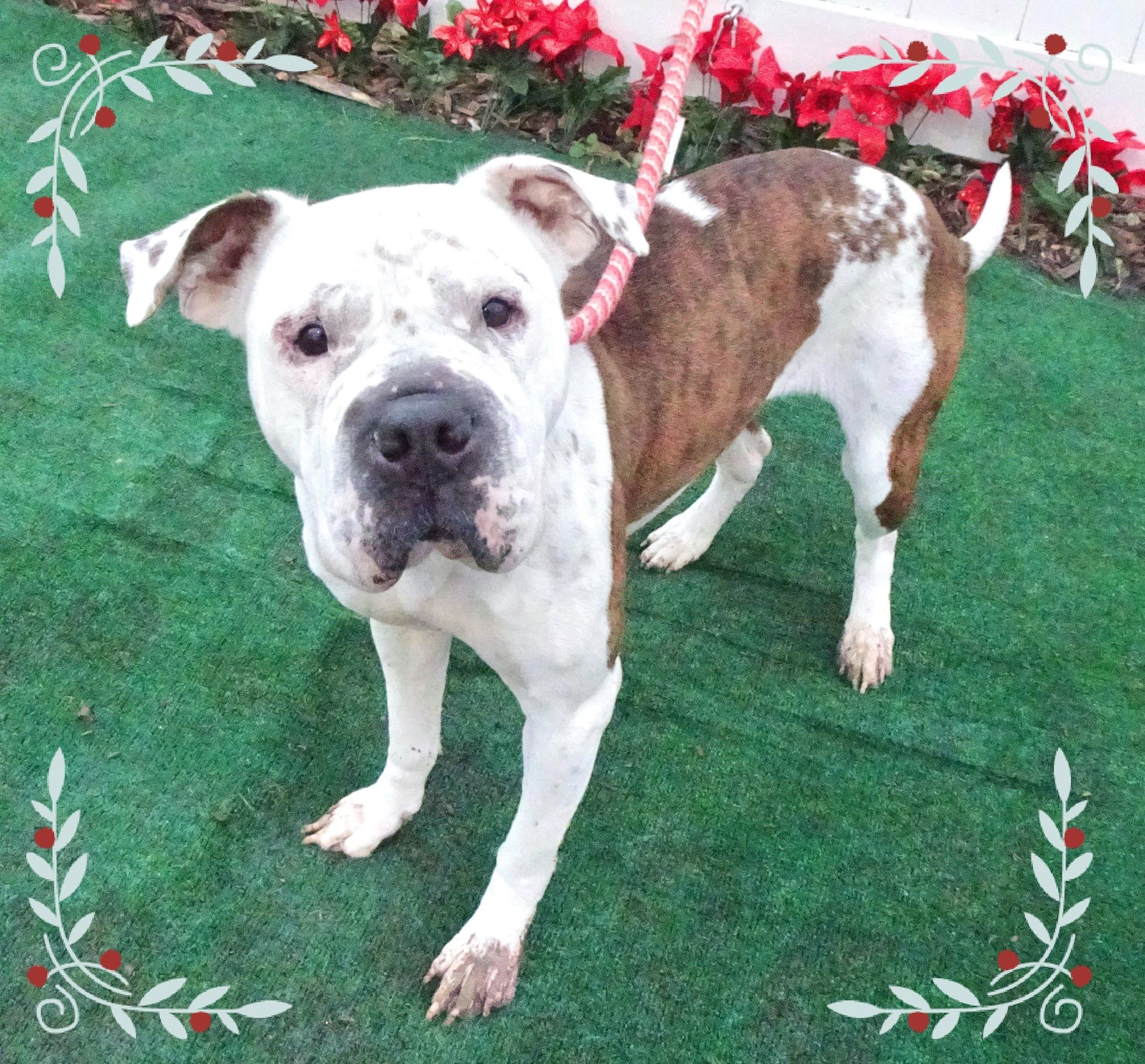 Adopt Snow R On Dogs Animal Shelter Pet Adoption