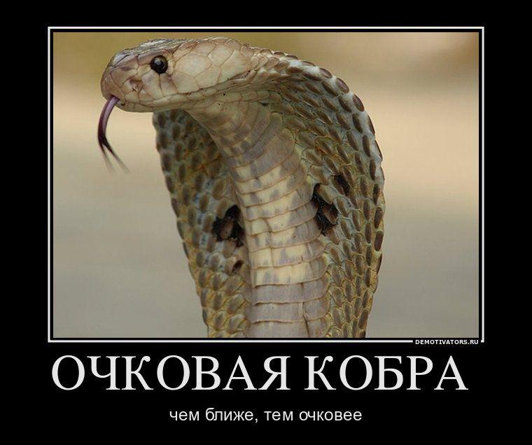 Самый, смешные картинки очковая змея