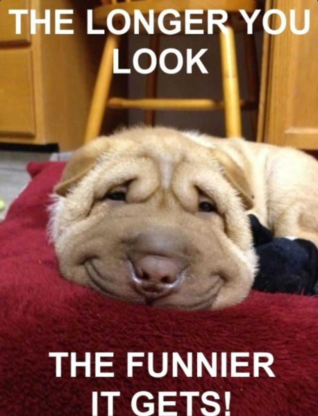 Stare At It For 20 Sec And Try Not To Laugh Funny Animals Funny Animal Pictures Funny Animal Memes