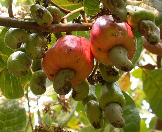 Pin On Garden Fruit Trees