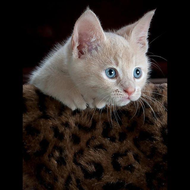 ️MonChatDoré?⠀ •⠀ •⠀ •⠀ •⠀ •⠀ #chat #cat #jaimemonchat #monchat #adorable #chati… | The most beautiful Instagram ...