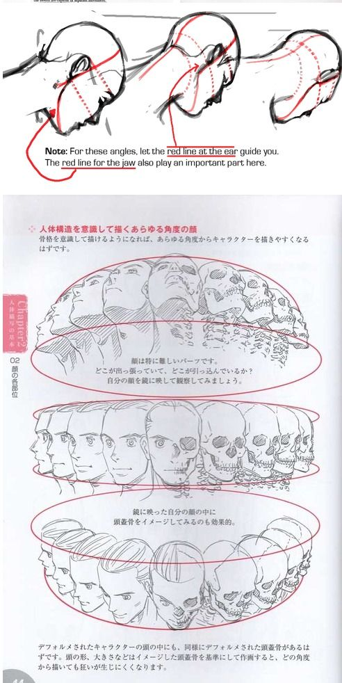 Pin by krea on Aurelia | Drawings, Drawing heads, Anatomy