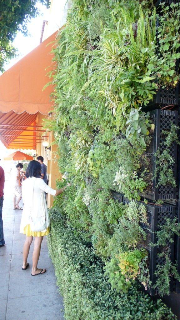 Wow! A vertical herb garden on the sidewalk.