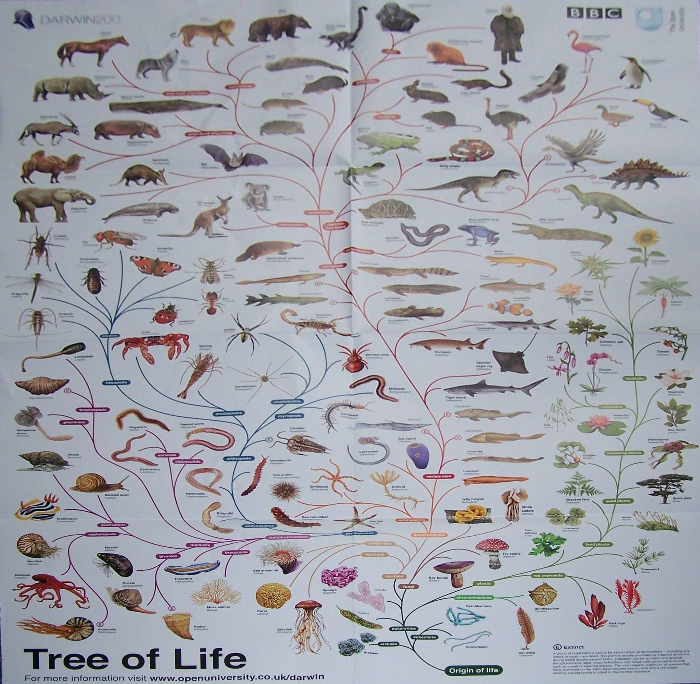 Image Result For Tree Of Life Evolution Poster