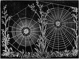 Resultado de imagen para spider web