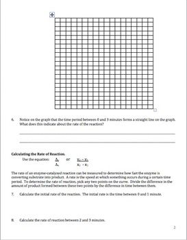 Enzymes Graphing And Critical Thinking Worksheet Biology
