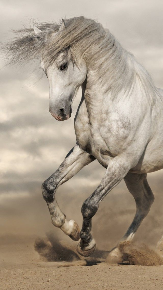 Beautiful light grey spirited running horse INSPIRATION - free horse bill of sale