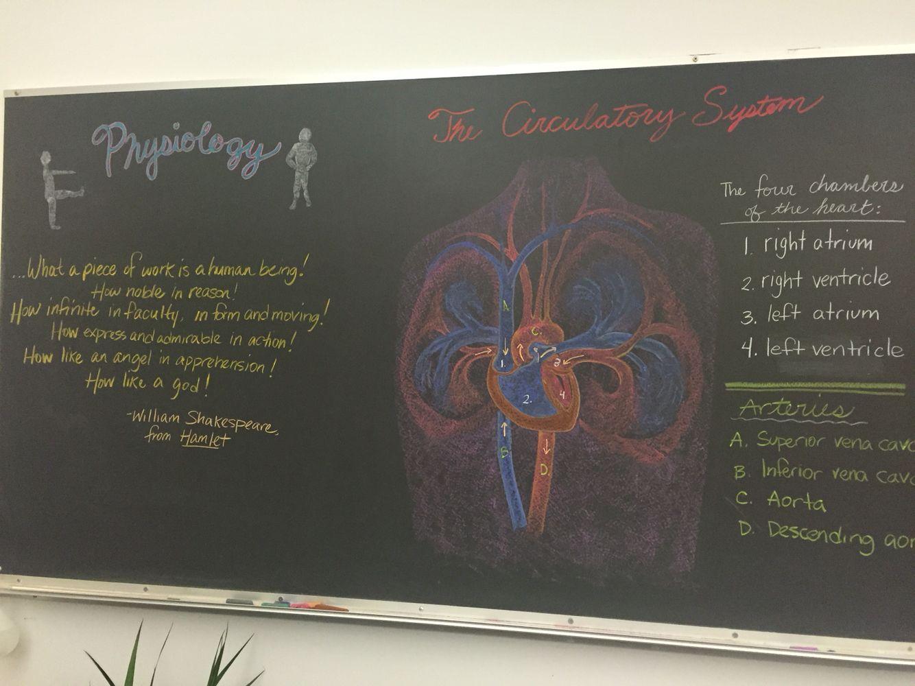 Circulatory System Physiology Chalkboard Grade 7 Waldorf
