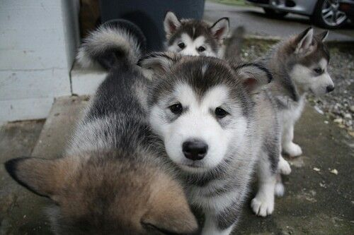 Doggyyy