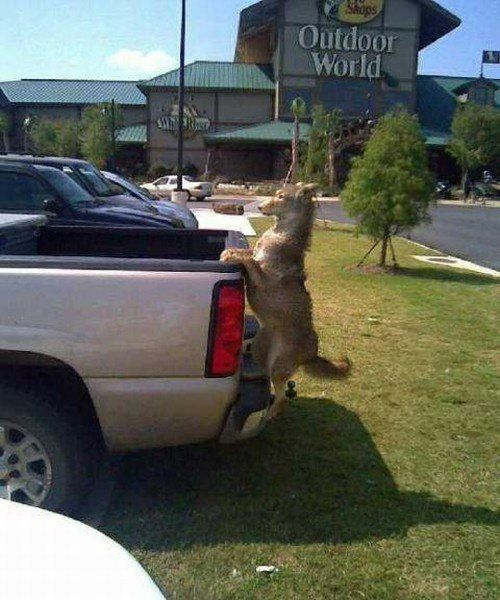 Someone Put A Taxidermy Dog On The Back Of Their Truck To Freak