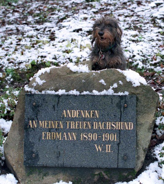 Kaiser Wilhelm Ii Dachshund