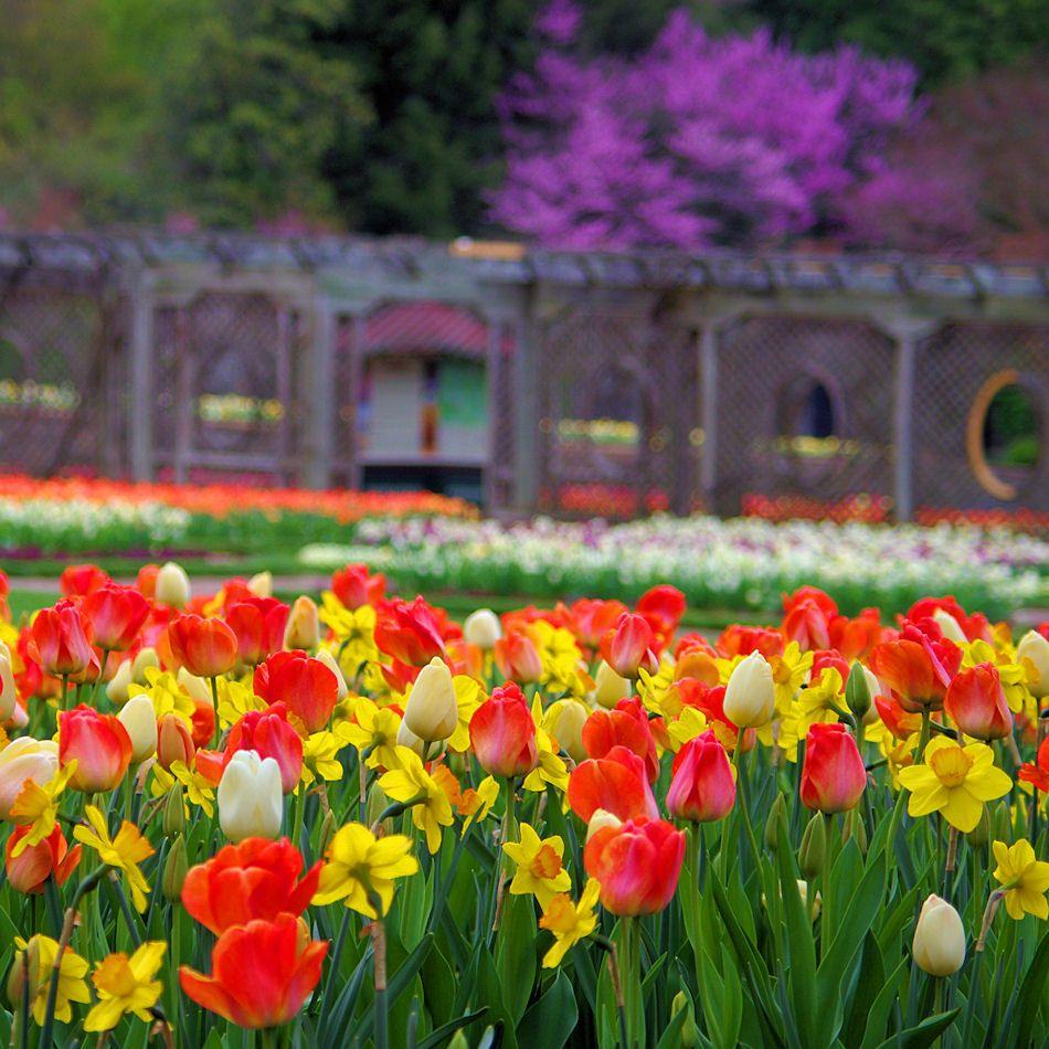 1717d780bdcd30a37abb1cef9011f34c - Best Time To Visit Biltmore Gardens