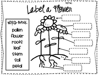 Science-Literacy Packet: The Lifecycle of a plant