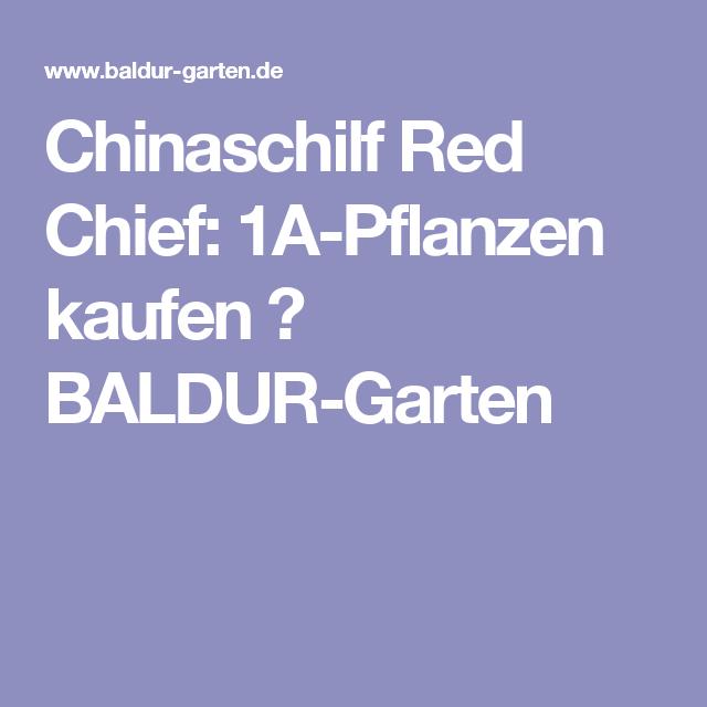 chinaschilf red chief 1a pflanzen kaufen baldur garten gr ser. Black Bedroom Furniture Sets. Home Design Ideas