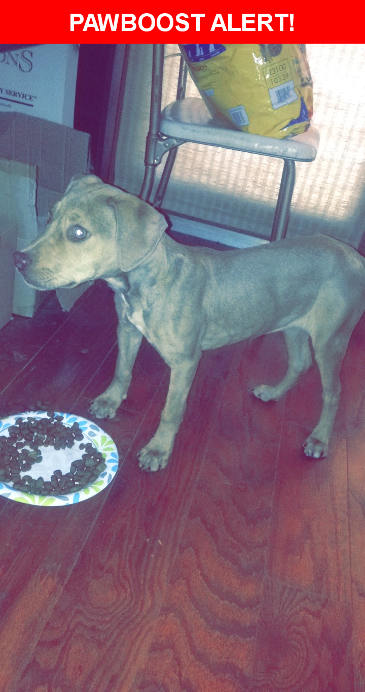 Is this your lost pet? Found in Arlington, TX 76012. Please spread the word so we can find the owner!    Nearest Address: Near Oakwood Ln & Elmridge Dr