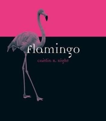 Flamingo Book Pdf