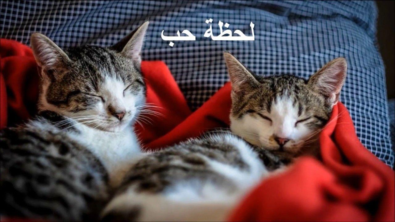 """أريد لحظة دهشة.. لحظة حب.. ! ..""""د.مصطفى محمود"""" (With"""