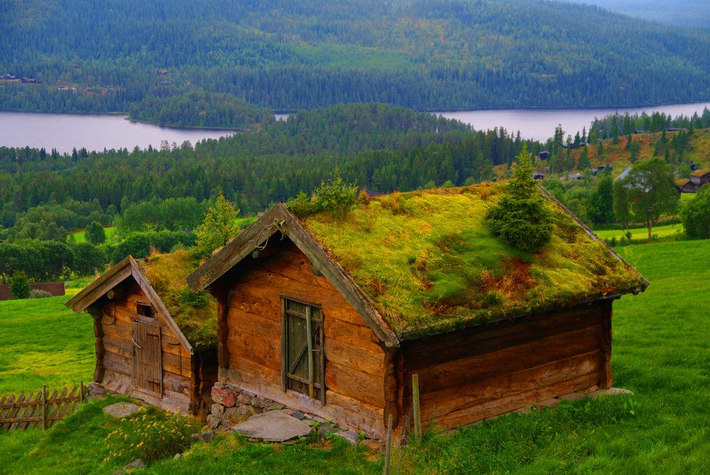 Pin By Dana Michele Smith On Norway Green Roof Norwegian House Norway