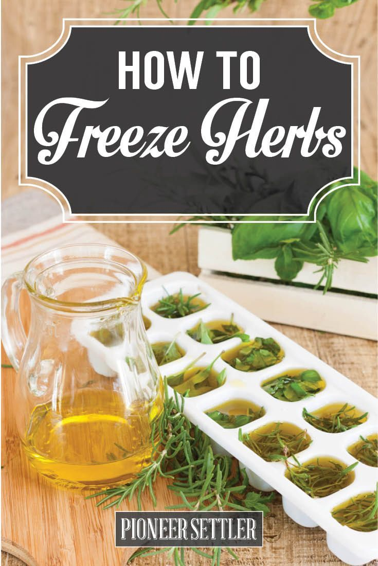 Freezing herbs with olive oil for long lasting flavor