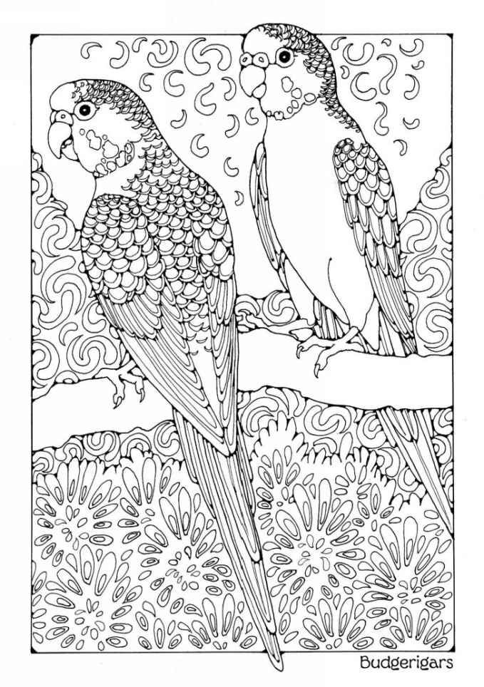 Amazon A Colouring Book Of Birds Coloring Books EBook Dandi