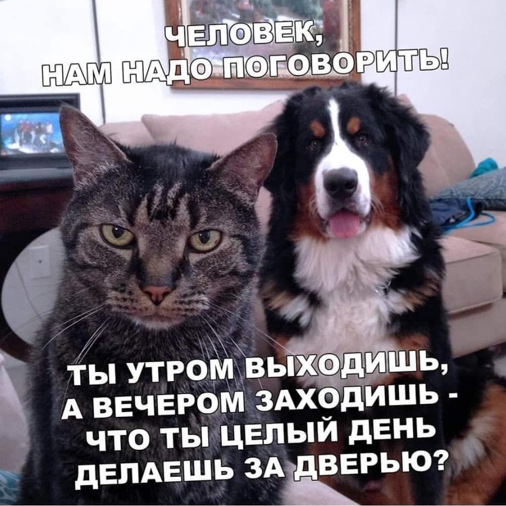 Серьезный разговор. Серьезней некуда dogscatsdog&cat