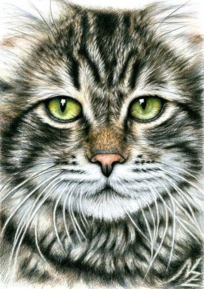 25 Beautiful And Realistic Animal Drawings Around The World Cat