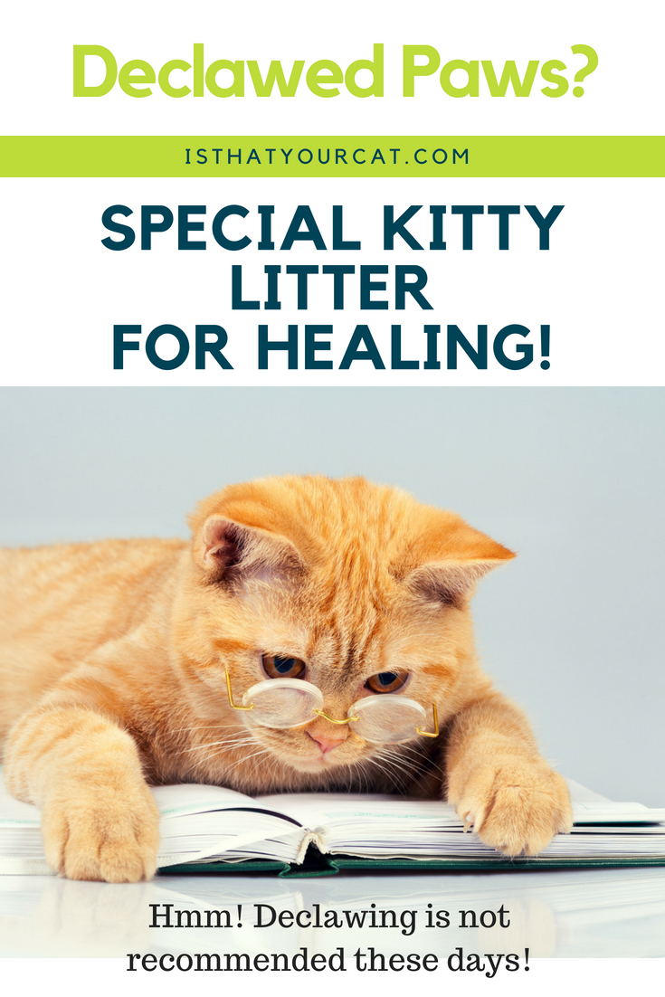 Cats that have been newly declawed need litter that is