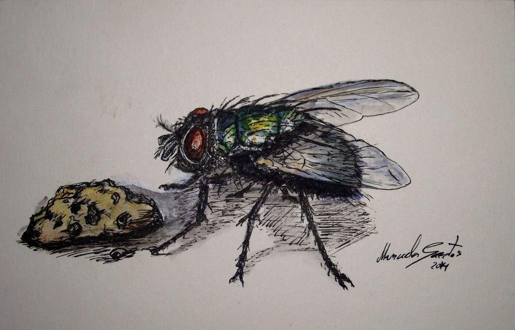 """Fly"" Black ink and watercolors. Tinta da china e aguarelas."