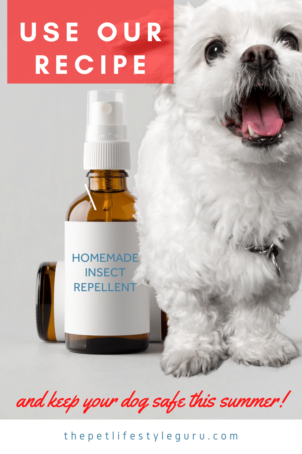 Homemade Insect Repellent For Dogs in 2020 Insect