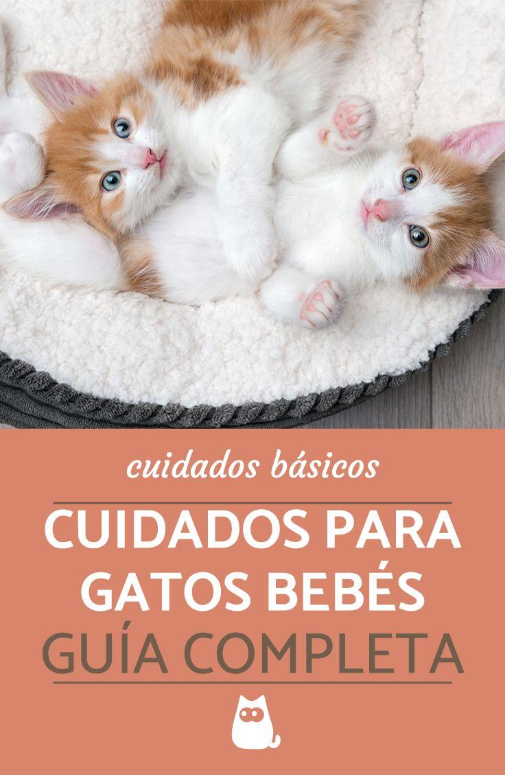 Cuidados De Gatos Cachorros La Guía Más Completa Gatos Bebes Cuidados Gatos Mascotas