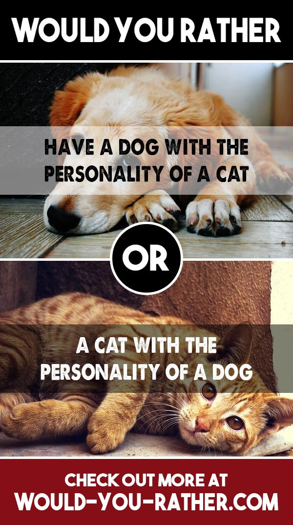 ᐅ Would you rather have a dog with the personality of a cat