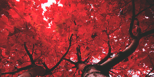 Header Twitter Header Aesthetic Red Aesthetic Twitter Header