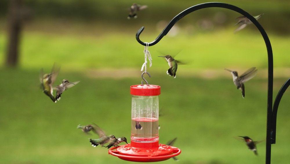 Pin on Bird Feeding Tips