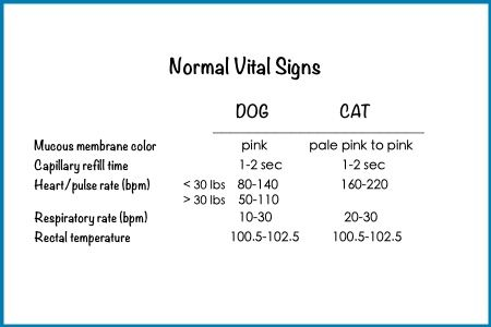 Normal Vitals For Cat And Dog