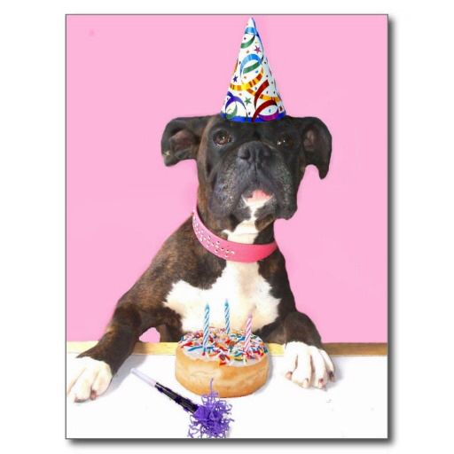 Image From Http Rlv Zcache Com Happy Birthday Boxer Dog Postcard