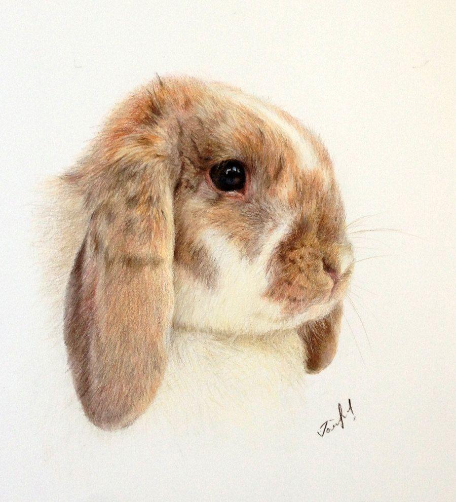 Colour Rabbit Drawing Portraits