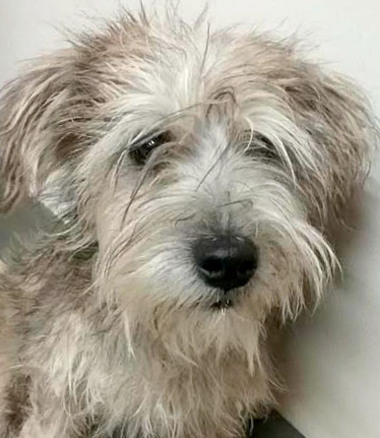 Adopt CosmoADOPTION PENDING on Rescue dogs, Dogs