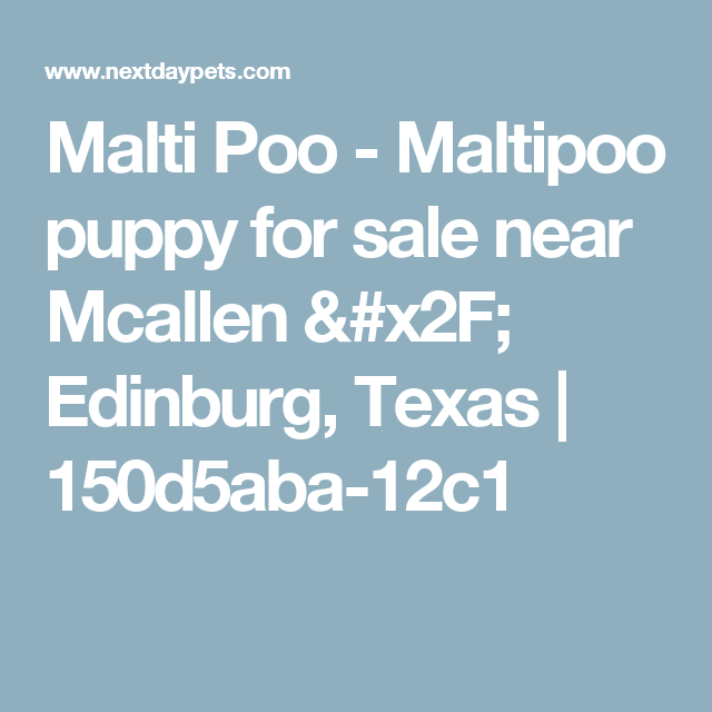 Malti Poo Maltipoo Puppy For Sale Near Mcallen X2f Edinburg Texas 150d5aba 12c1 Maltipoo Maltipoo Puppies For Sale Maltipoo For Sale