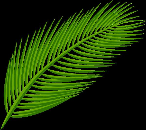 Palm Leaf Transparent Clip Art Image Leaves Palm Leaves Leaf Art